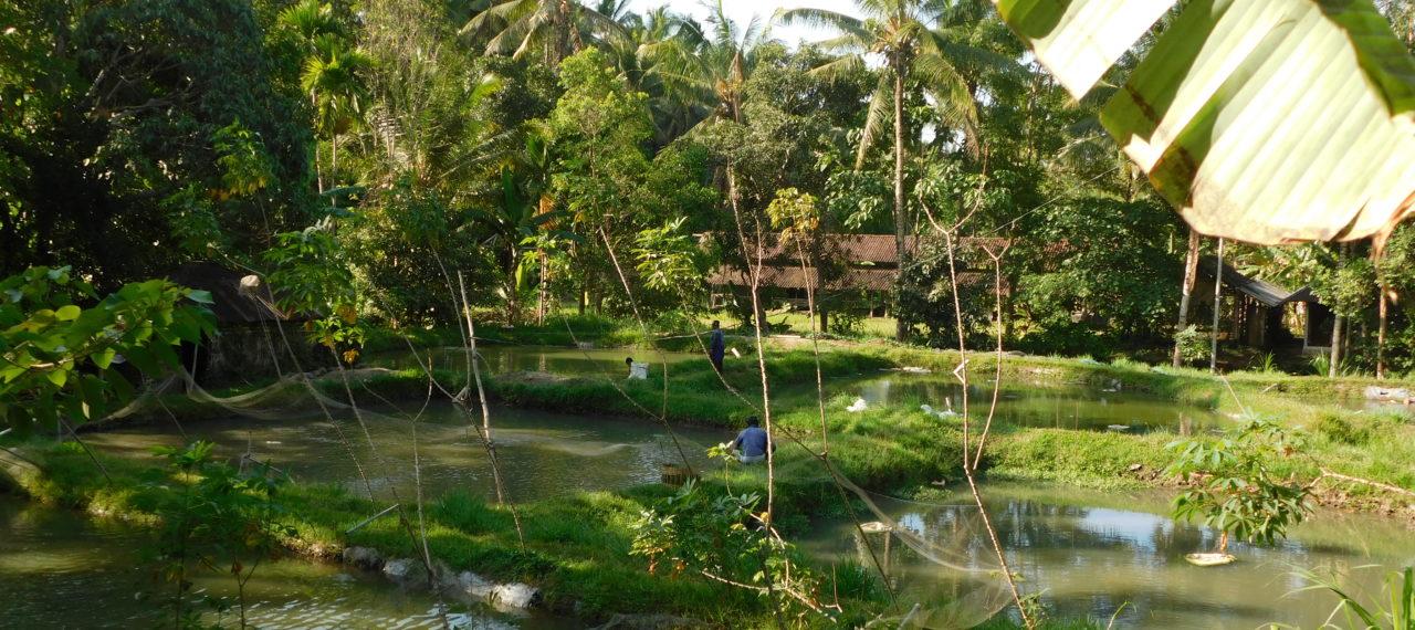 Notre projet écologique en Indonésie